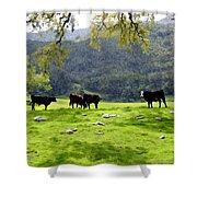 Four Cows At Nojoqui Ranch Shower Curtain
