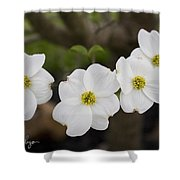 Four Dogwoods Shower Curtain