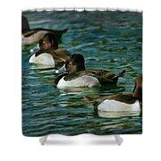 Four Ducks In A Row Shower Curtain