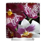 Four Exotic Orchid Blossoms Shower Curtain