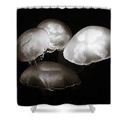 Four Jellyfish Shower Curtain