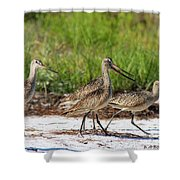 Four Marbled Godwits Shower Curtain