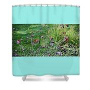 Four Monarch Butterflies Shower Curtain