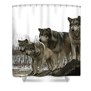 Four Pack Shower Curtain