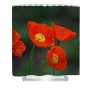 Four Poppies Shower Curtain