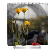 Four Poppies With Harbour Bridge Backdrop Shower Curtain
