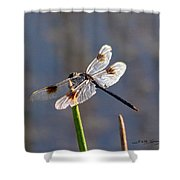 Four Spotted Pennant On A Reed Shower Curtain