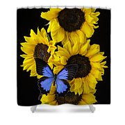 Four Sunflowers And Blue Butterfly Shower Curtain