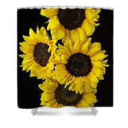 Four Sunny Sunflowers Shower Curtain