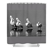 Four White Pelicans In A Funny Pose Shower Curtain