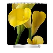 Four Yellow Calla Lilies Shower Curtain by Garry Gay