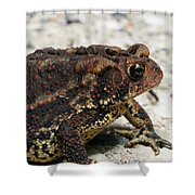 Fowler's Toad #2 Shower Curtain