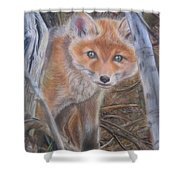 Fox Cub Shower Curtain