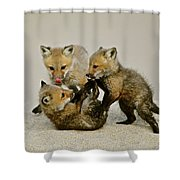 Fox Cubs At Play II Shower Curtain