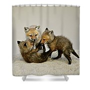 Fox Cubs At Play Shower Curtain