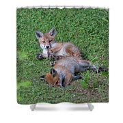 Fox Cubs Chilling Out Shower Curtain