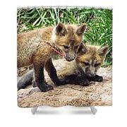 Fox Feather Play Shower Curtain