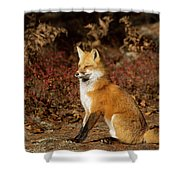 Fox In The Fall Shower Curtain