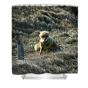 Fox In The Wind Shower Curtain
