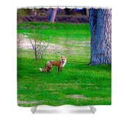Fox Of Boulder County Shower Curtain