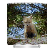 Fox Pup112 Shower Curtain