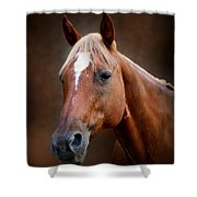 Fox - Quarter Horse Shower Curtain by Sandy Keeton