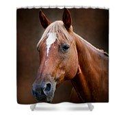 Fox - Quarter Horse Shower Curtain