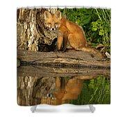 Fox Reflection Shower Curtain