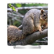 Fox Squirrel On A Branch - Southern Indiana Shower Curtain