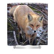 Fox Stare Shower Curtain