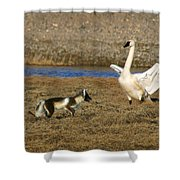 Fox Vs Swan Shower Curtain
