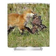 Fox With Dinner Shower Curtain
