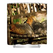 Foxes In A Chair Shower Curtain