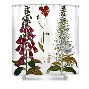 Foxglove And Hawkweed Shower Curtain