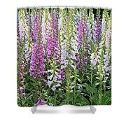 Foxglove Garden - Digital Art Shower Curtain