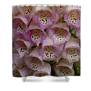 Foxglove Upclose Shower Curtain