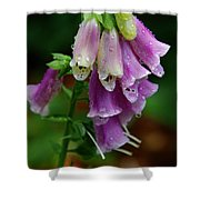 Foxgloves In The Rain Shower Curtain