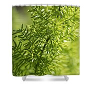 Foxtail Fern In Spring Shower Curtain