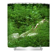 foxtail IV Shower Curtain