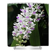 Foxtail Orchid Shower Curtain