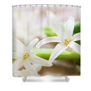 Fragile And Delicate  Shower Curtain