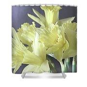 Fragile Daffodils Shower Curtain