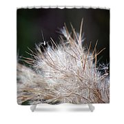 Fragile Seeds Shower Curtain