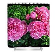 Fragrant Pink Peonies Shower Curtain