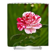 Fragrant Pink Shower Curtain