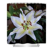 Fragrant White Lily Shower Curtain