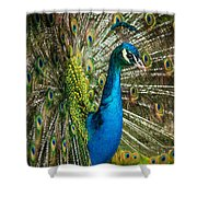 Framed In Feathers Shower Curtain