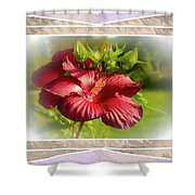Framed Red Hibiscus Shower Curtain