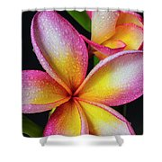 Frangipani After The Rain Shower Curtain