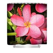 Frangipani Blossom Shower Curtain